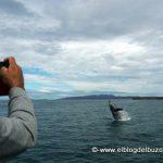 Fotografiando ballenas.