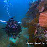 Gorgonias en el Mar de Cortes.
