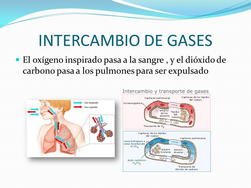 El intercambo de gases influye en el consumo de un buzo.