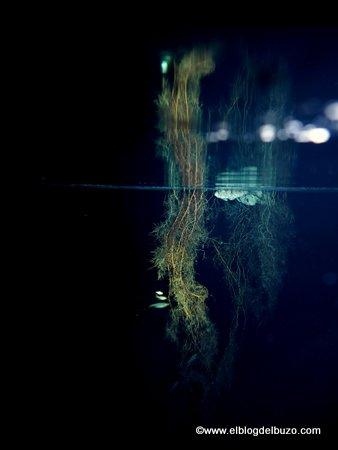Un paisaje durante un buceo en una cueva.