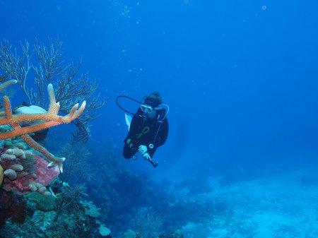 Inmersiones del curso en el mar