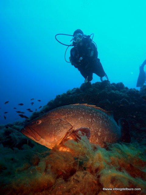 Buceo en Tabarca. Una perla en el Mediterráneo