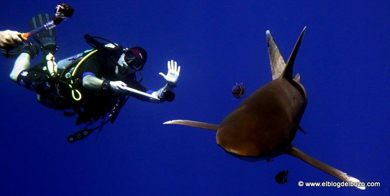 Bucear con tiburones es seguro