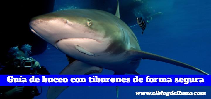 ¿Como bucear con tiburones de forma segura?
