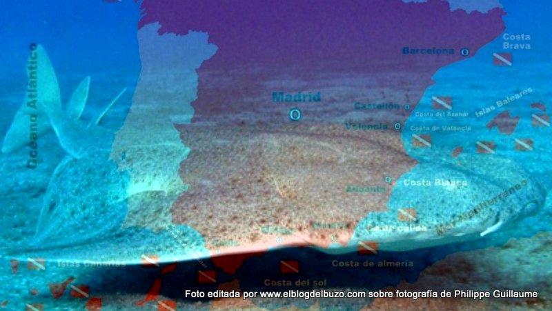 Bucear con tiburones en España