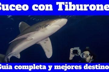 La guía más completa para bucear con tiburones