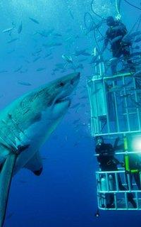 Buceo con tiburones en jaula