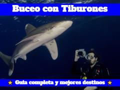 Buceo con tiburones. Guía completa y mejores destinos
