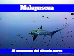 Guía de buceo en Malapascua.