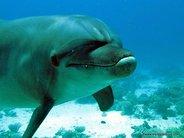 Delfin en Dolphin house