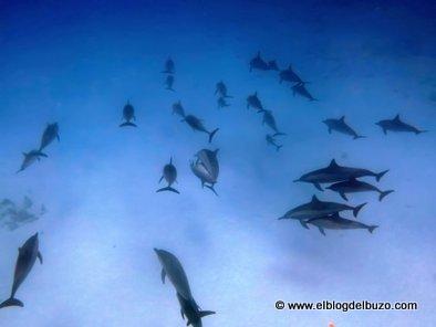 Delfines en la ruta sur profundo, Mar Rojo