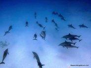 Escuela de delfines