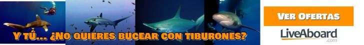 Ofertas de buceo con tiburones